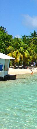 sainte anne beach guadeloupe